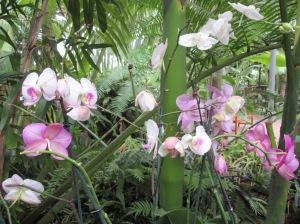 Flowers inside the Myriad Gardens Tropical Conservatory