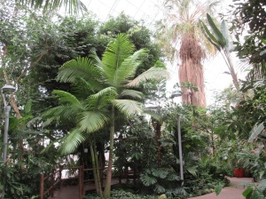 Inside the Myriad Gardens Tropical Conservatory